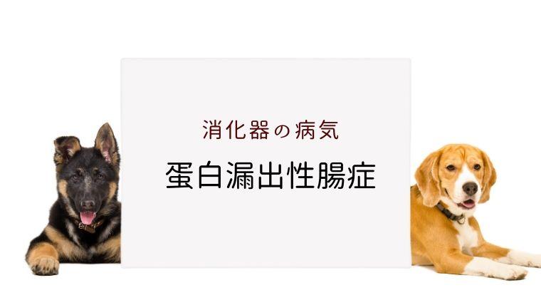 犬と猫の蛋白漏出性腸症 まとめ 大和市の花岡動物病院ブログ