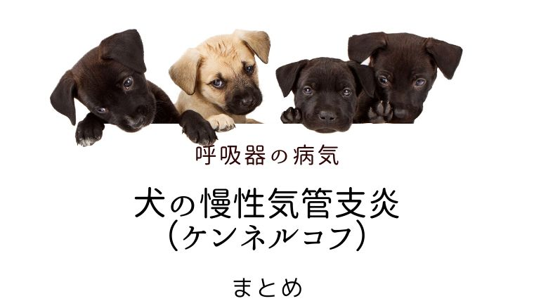 犬 慢性気管支炎 ケンネルコフ