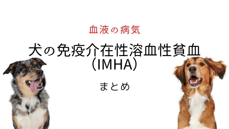 犬の免疫介在性貧血(IMHA)