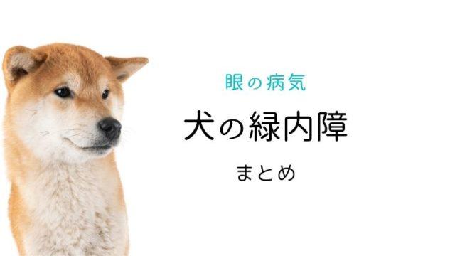 犬 緑内障