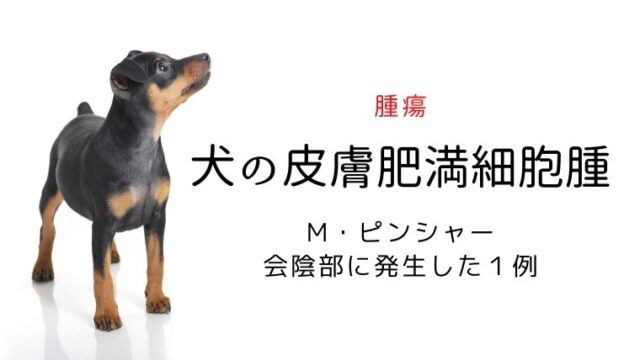 犬 肥満細胞腫