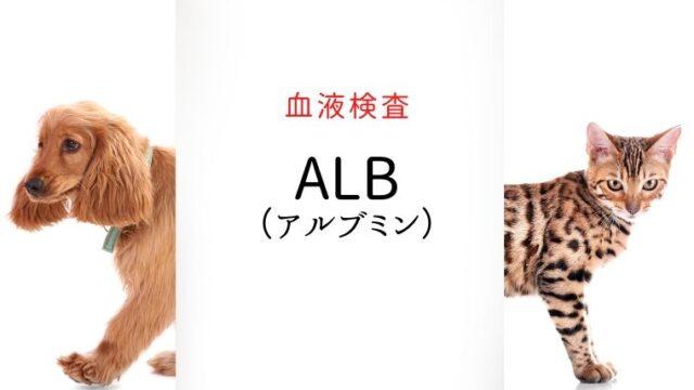 犬猫 血液検査 ALB