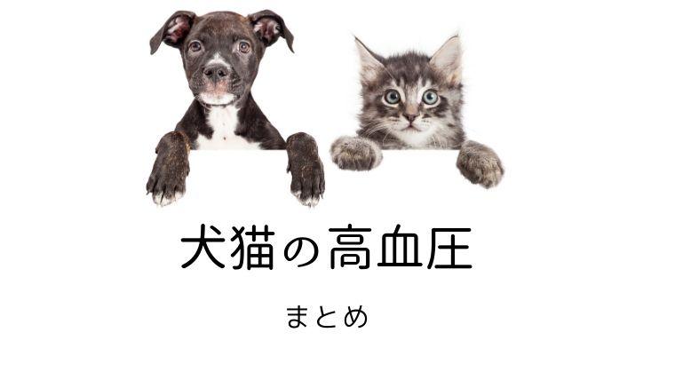 犬猫の高血圧