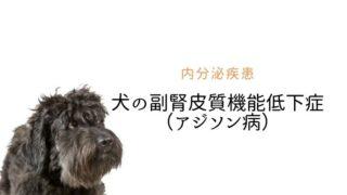 犬の副腎皮質機能低下症 アジソン病