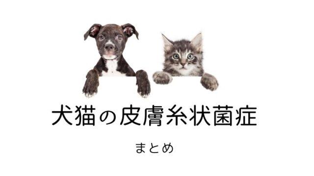 犬猫 皮膚糸状菌症