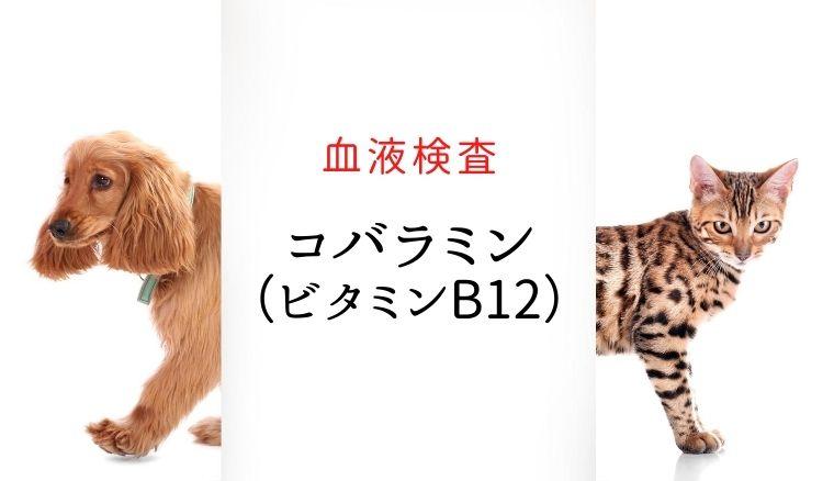 犬猫 コバラミン