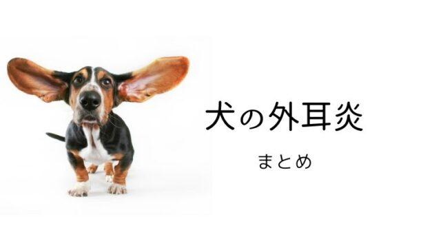 犬の外耳炎