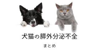 犬猫 膵外分泌不全